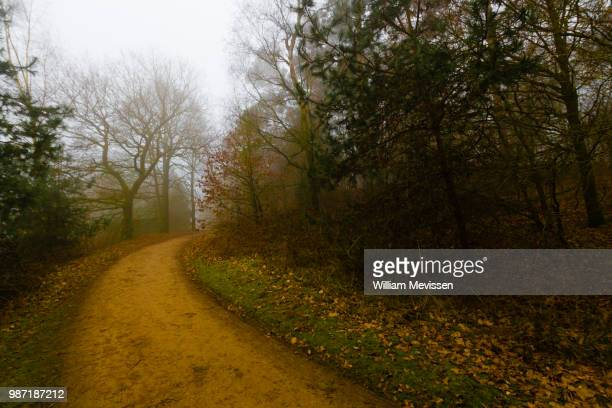 misty forest lane 'curve' - william mevissen stock-fotos und bilder