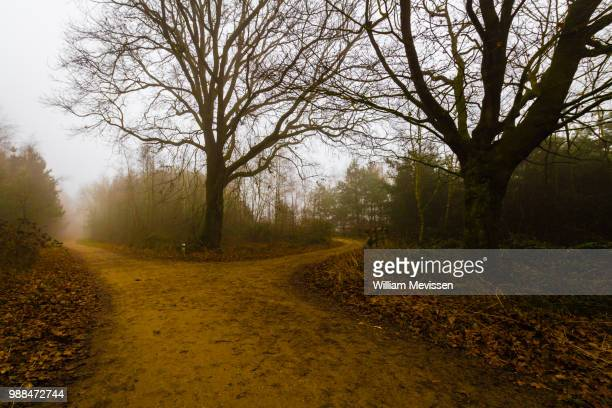 misty forest lane 'tree' - william mevissen stock-fotos und bilder