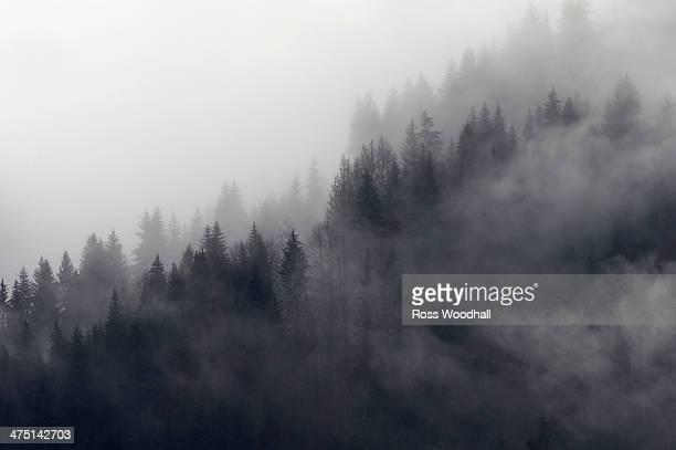 Misty forest, Murren, Bernese Oberland, Switzerland
