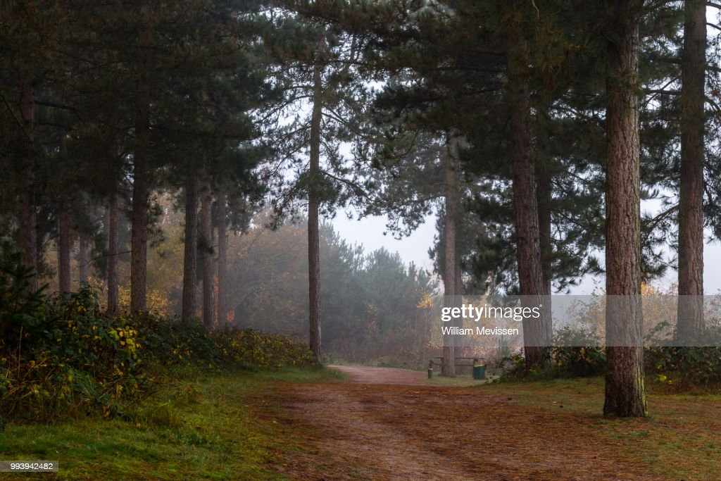 Misty Forest Path : Stockfoto