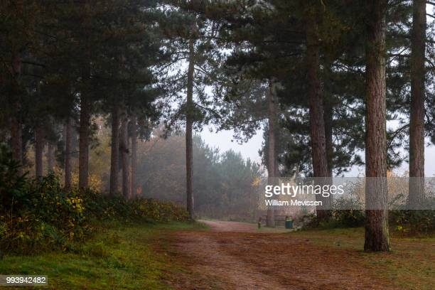misty forest path - william mevissen stockfoto's en -beelden