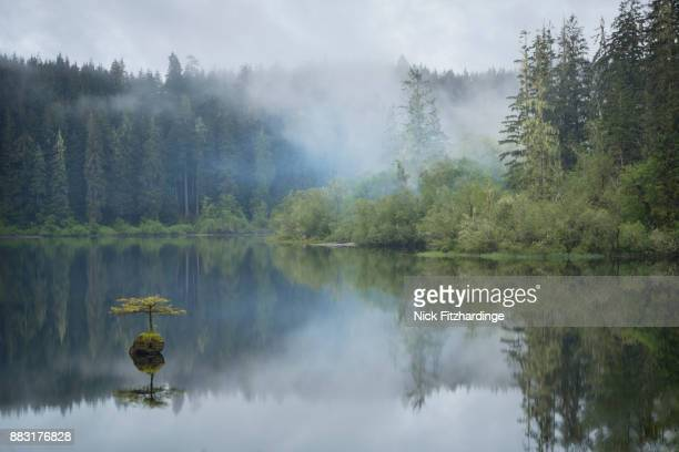 misty forest scene at fairy lake, port renfrew, vancouver island, british columbia, canada - vancouver island stockfoto's en -beelden