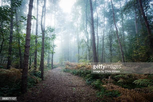 misty forest walk - woodland stock pictures, royalty-free photos & images