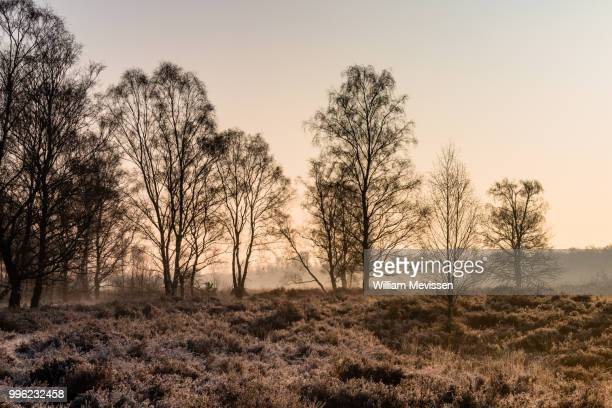 misty golden silhouettes - william mevissen stock pictures, royalty-free photos & images
