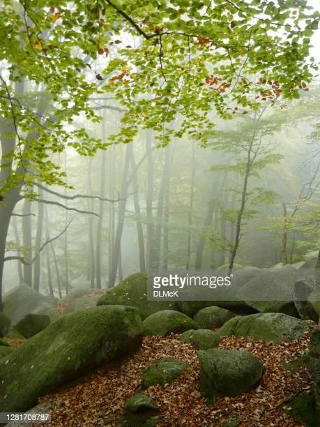 nebelgrüner wald - ast pflanzenbestandteil stock-fotos und bilder