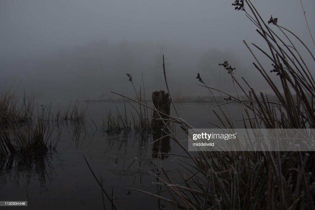 Misty heath : Stock Photo