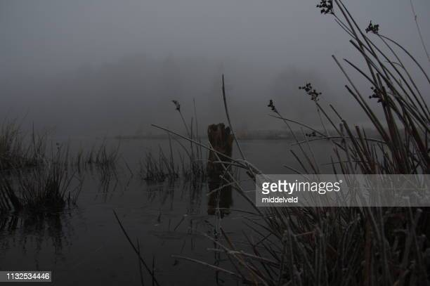 misty heath - zonsopgang stock pictures, royalty-free photos & images