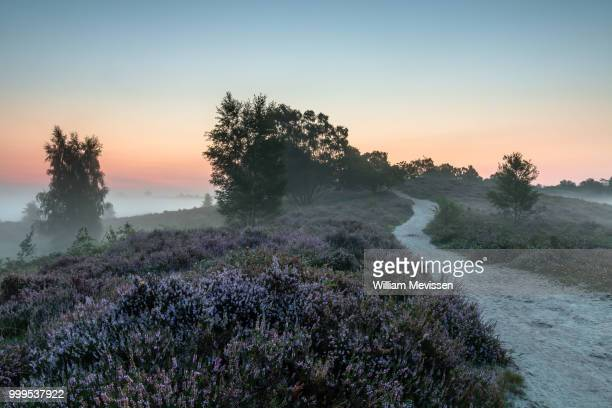 misty heather path de hamert - william mevissen foto e immagini stock