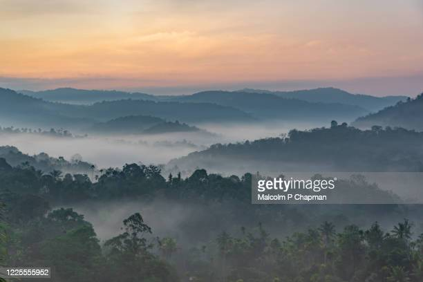 """misty hills at sunrise, munnar, kerala, india - india """"malcolm p chapman"""" or """"malcolm chapman"""" stock pictures, royalty-free photos & images"""