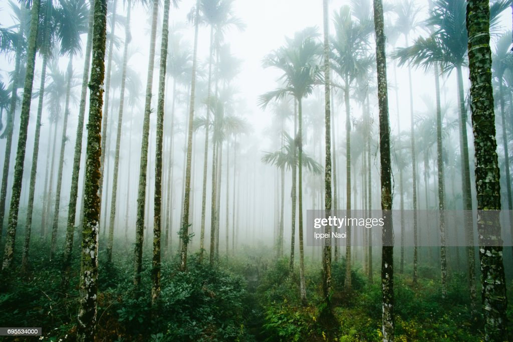 Misty jungle of palm trees in Taiwan : Stock Photo