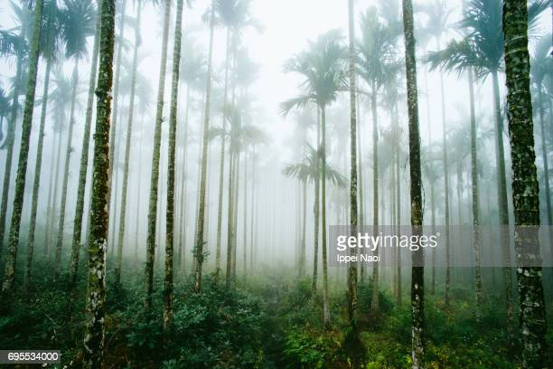 Misty jungle of palm trees in Taiwan