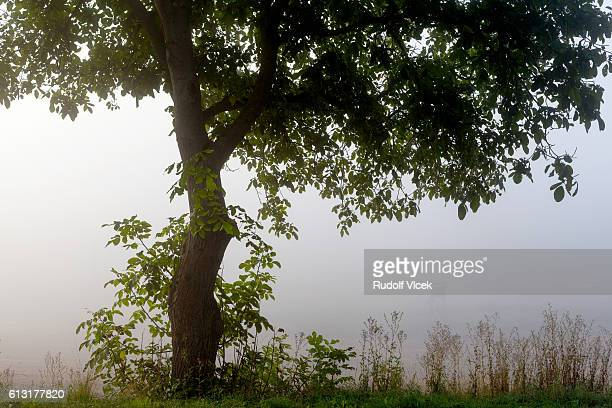 misty landscape framed by an apple tree - czech hunters stock pictures, royalty-free photos & images