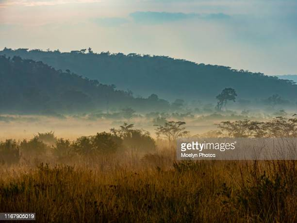 misty landscape - south africa stock pictures, royalty-free photos & images