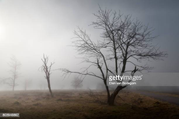 Misty landscape with bald tree on top of Kahler Asten mountain, Winterberg, Germany