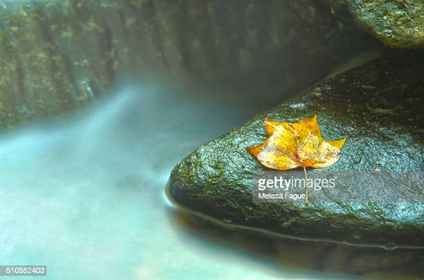 misty leaf - melissa fague stock pictures, royalty-free photos & images