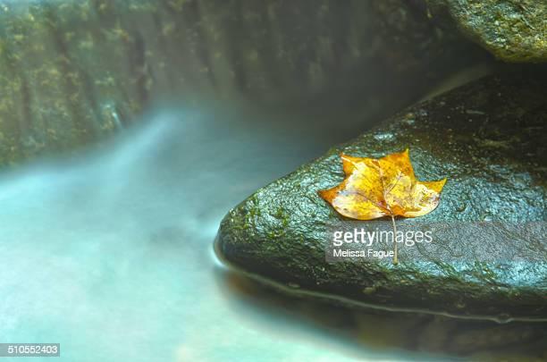 Misty leaf