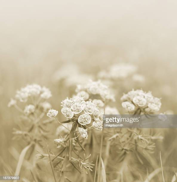 misty meadow - magdasmith stock pictures, royalty-free photos & images