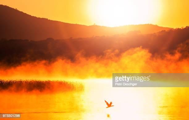 misty morning at the lake. - 地形 ストックフォトと画像