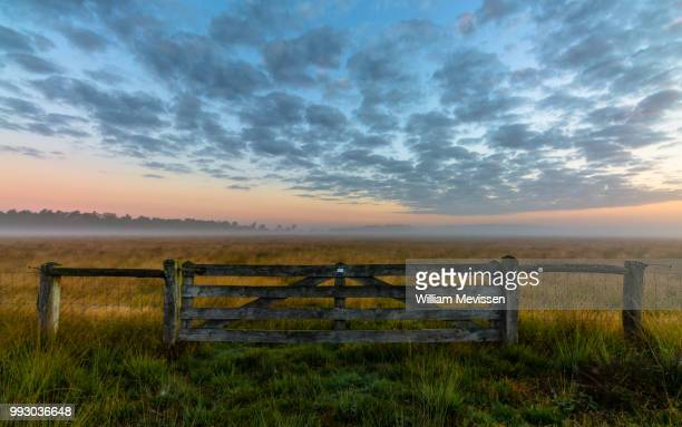 misty morning gate - william mevissen stock pictures, royalty-free photos & images