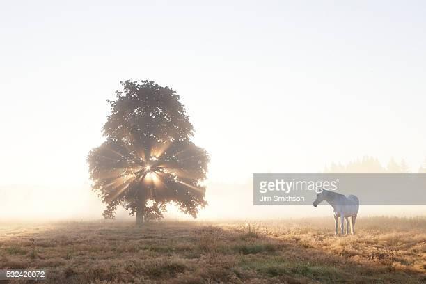 Misty morning horse