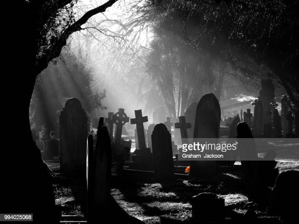 misty morning in le foulon. - cemetery stock photos and pictures