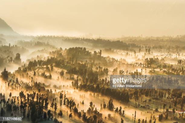 misty morning in mountain forest of bromo - bromo tengger semeru national park stock photos and pictures