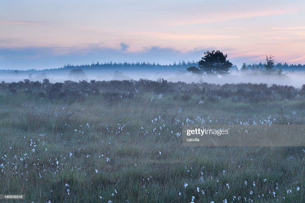 misty morning on marsh : Stock Photo