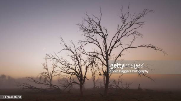 misty morning - uralla stock photos and pictures