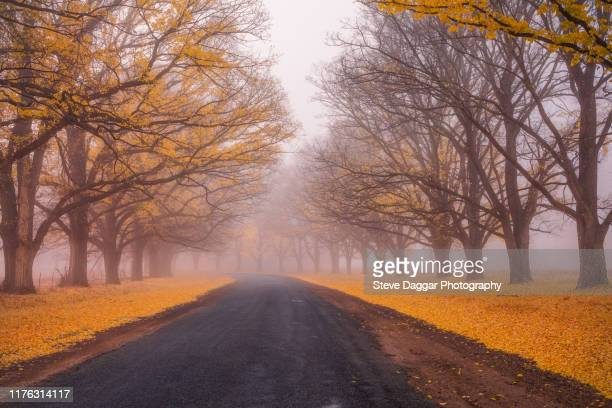 misty morning - uralla stock pictures, royalty-free photos & images