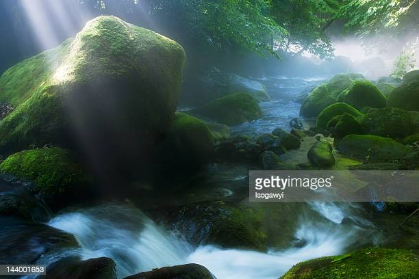 misty morning - isogawyi stock pictures, royalty-free photos & images