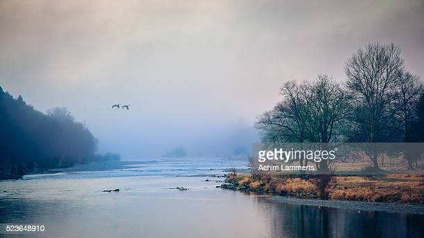 misty morning - achim lammerts stock pictures, royalty-free photos & images