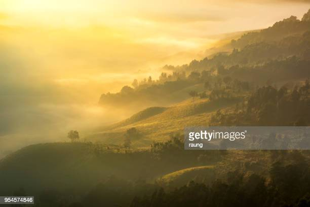 misty morning - east java province stock pictures, royalty-free photos & images