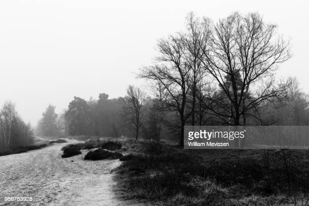 misty morning - william mevissen stock pictures, royalty-free photos & images