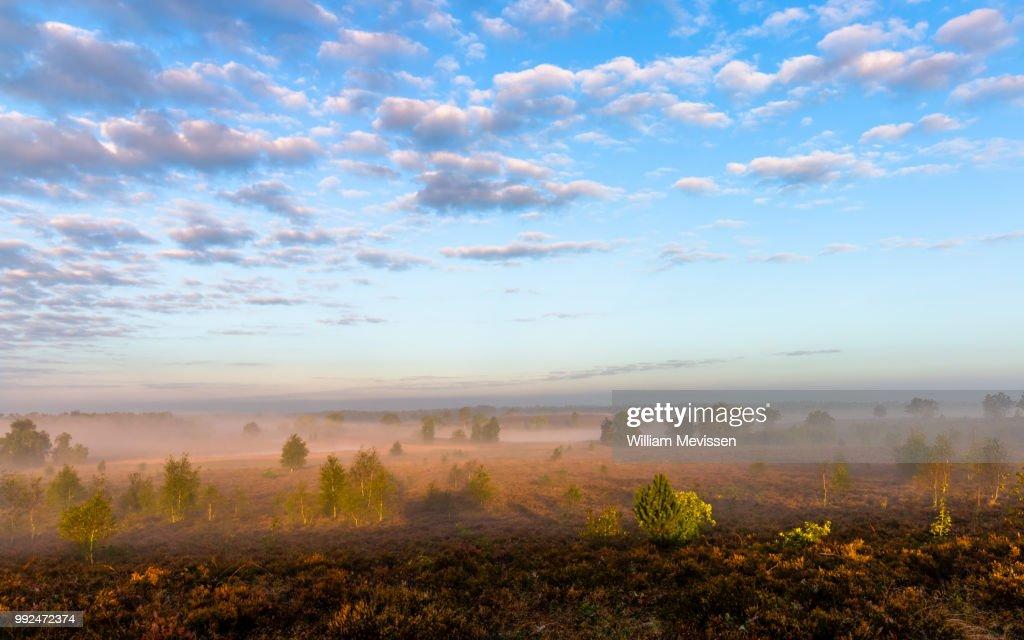 Misty Morning Sunlight (I) : Stockfoto