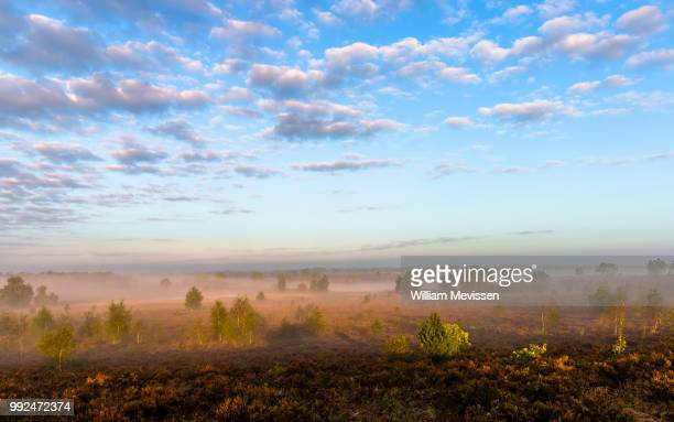misty morning sunlight (i) - william mevissen stockfoto's en -beelden