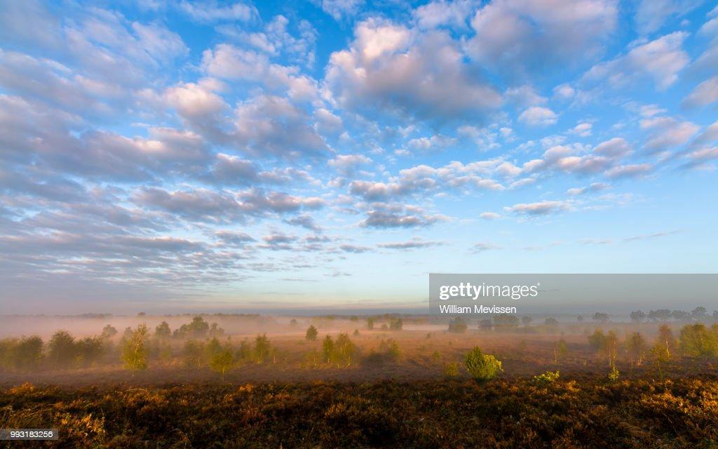 Misty Morning Sunlight (II) : Stockfoto