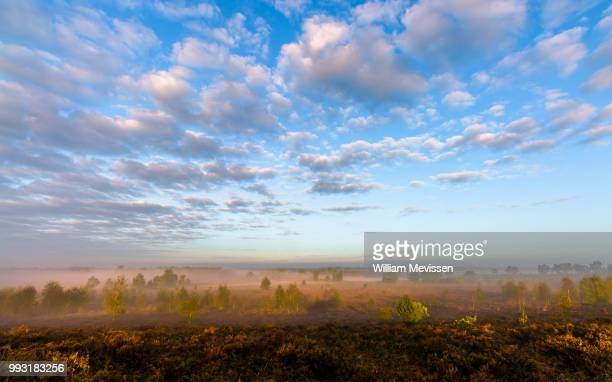 misty morning sunlight (ii) - william mevissen stockfoto's en -beelden