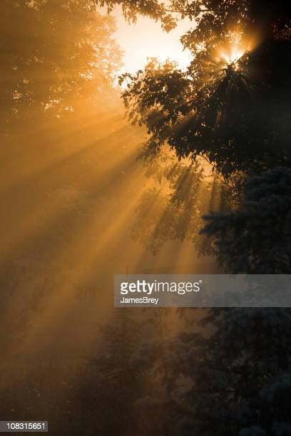 Misty Morning Sunrise; Sunlight Rays Through Fog, Tree Branches, Nature