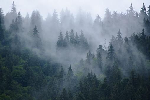 Misty mountain landscape 1009702398
