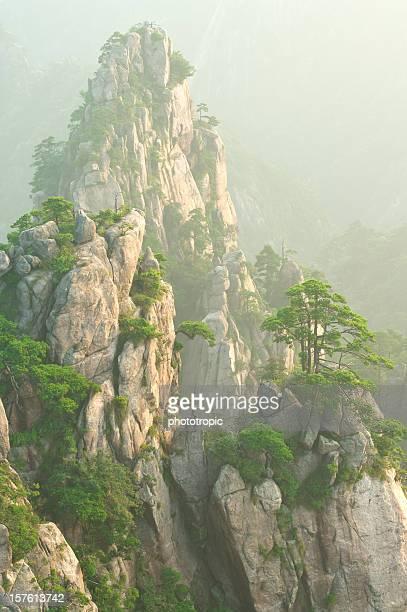 picco di montagna nebbioso e pini di huangshan - foresta temperata foto e immagini stock
