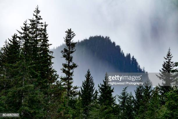 misty mountaintop - highlywood stock photos and pictures