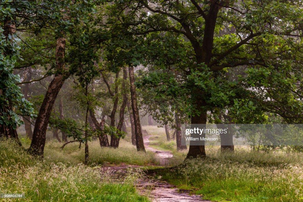 Misty Path Of Trees : Stockfoto