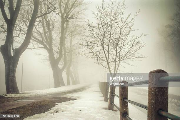 misty path - pomorskie province stock photos and pictures