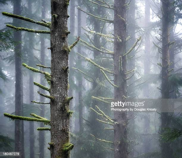 Misty Pine Antlers