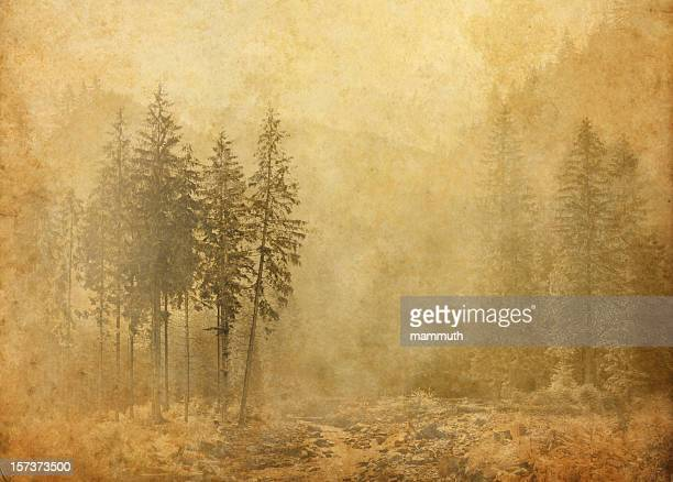 misty pine grove - parchment stock pictures, royalty-free photos & images