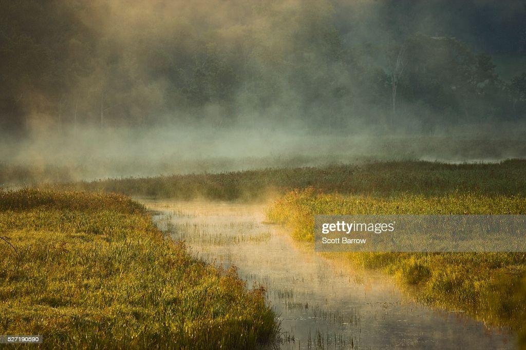 Misty river : Foto de stock