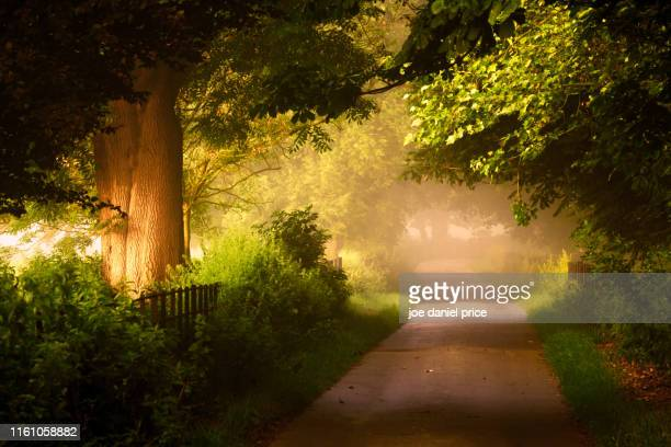 misty road, rye, sussex, england - sussex stock pictures, royalty-free photos & images