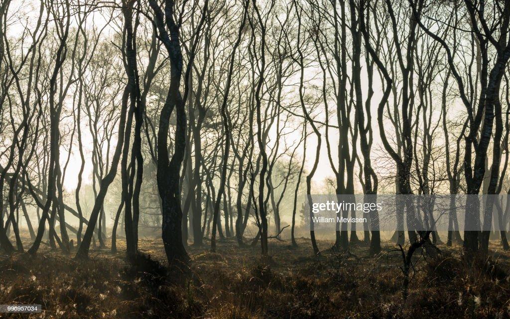 Misty Silhouettes : Stockfoto