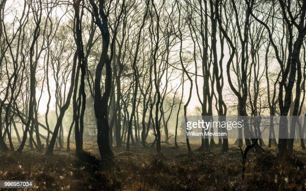 misty silhouettes - william mevissen stock pictures, royalty-free photos & images