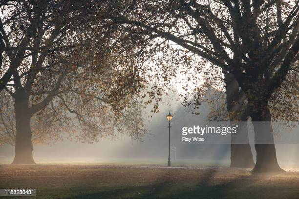 misty sunrise at battersea park in london - battersea park stock pictures, royalty-free photos & images